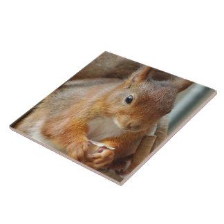 Squirrel Écureuil squirrel - Glineur Photograp Tile