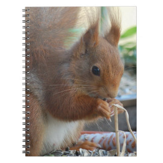 Squirrel ~ Écureuil ~ squirrels ~ by GLINEUR Spiral Notebook