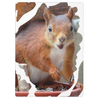 Squirrel ~ Écureuil ~ squirrels ~ by JL GLINEUR Clipboards