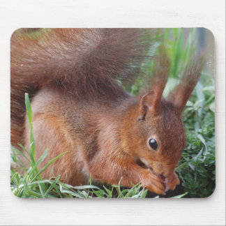Squirrel ~ Écureuil ~ squirrels ~ by JL GLINEUR Mouse Pad