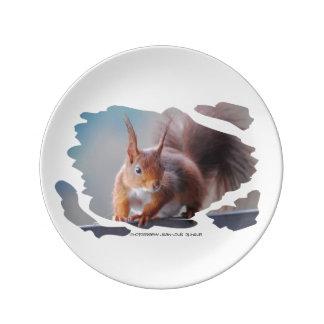 Squirrel ~ Écureuil ~ squirrels ~ by JL GLINEUR Plate