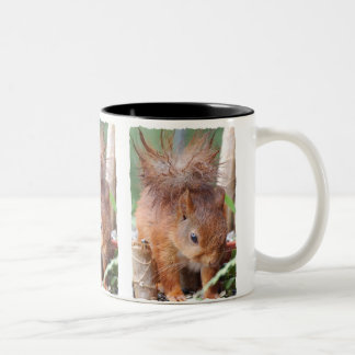 Squirrel ~ Écureuil ~ squirrels ~ by JL GLINEUR Two-Tone Coffee Mug