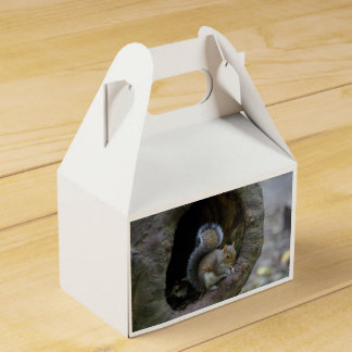 Squirrel Favour Box