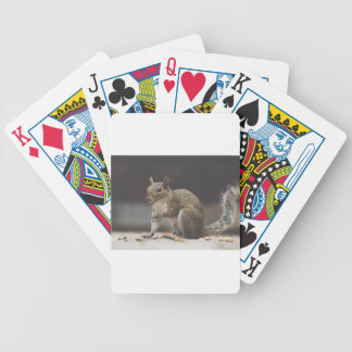 Squirrel Fluffy Bicycle Playing Cards