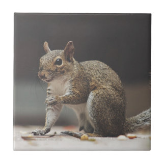 Squirrel Fluffy Ceramic Tile