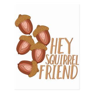 Squirrel Friend Postcard