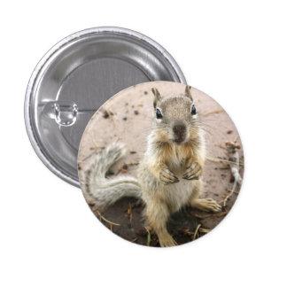 squirrel - Grand Canyon Photograph 3 Cm Round Badge
