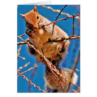 Squirrel (Grey) Card