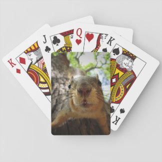 Squirrel Hanging Closeup 1 Playing Cards