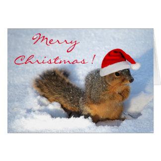 Squirrel Holiday Card