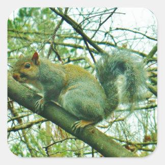Squirrel in a Light Blue Mist Square Sticker