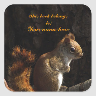 Squirrel in a Patch of Sunlight Square Sticker