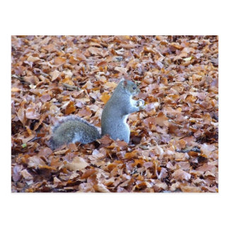 Squirrel in autumn leaves postcard