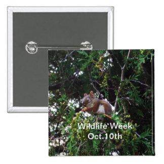 Squirrel in Cedar Tree 15 Cm Square Badge