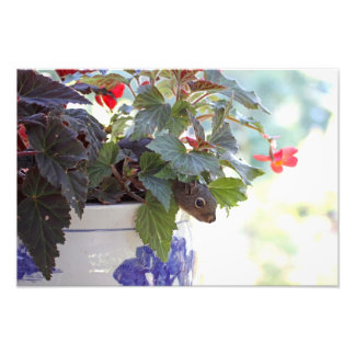 Squirrel in Flower Pot Photographic Print