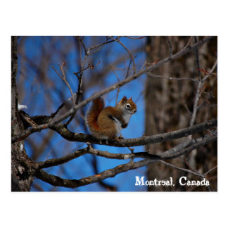 Squirrel in Montreal Postcard
