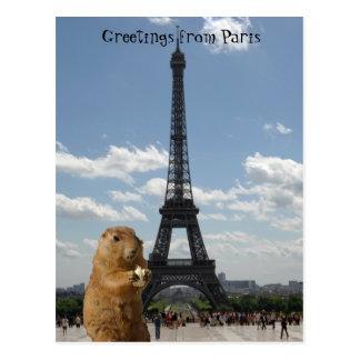 Squirrel in Paris Postcard