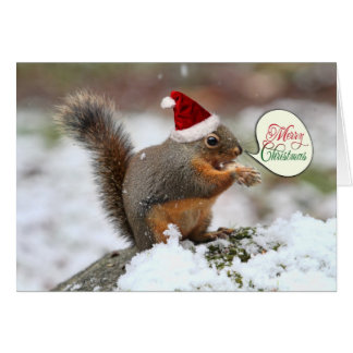 Squirrel in Snow Christmas Card
