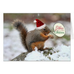 Squirrel in Snow Christmas Cards