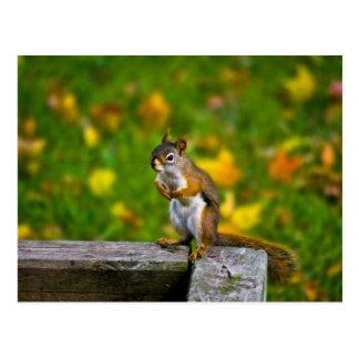 Squirrel in the baking yard/squirrel postcard