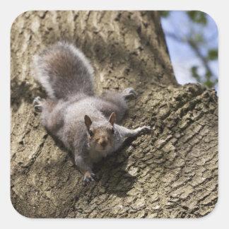 Squirrel in the park square sticker