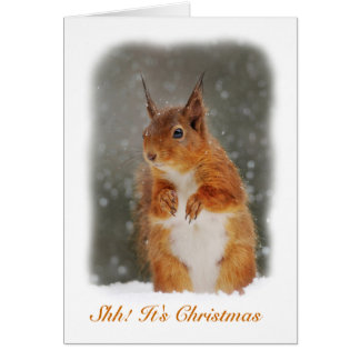 Squirrel In The Snow Greeting Card