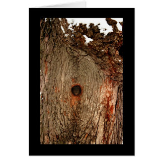 Squirrel in Tree Card