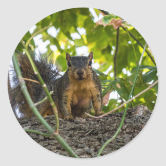 Squirrel in tree classic round sticker