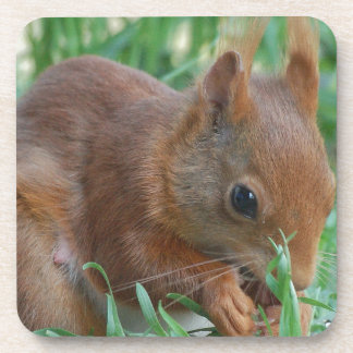 Squirrel - Jean Louis Glineur Photography Coaster