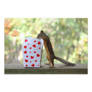 Squirrel Looking Inside Heart Box Photo