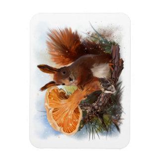 Squirrel Magnet