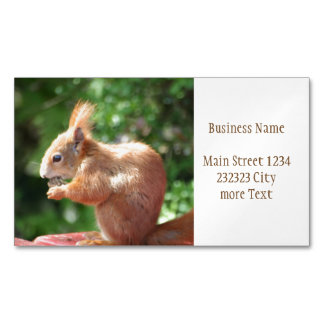 Squirrel Magnetic Business Card
