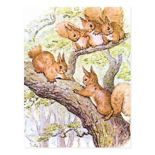 Squirrel Meeting Postcard
