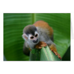 Squirrel Monkey Costa Rica Greeting Card