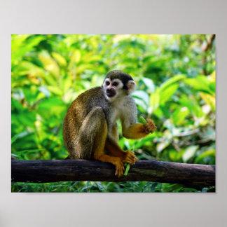 Squirrel Monkey Poster
