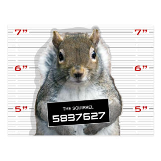 Squirrel Mug Shot Postcard