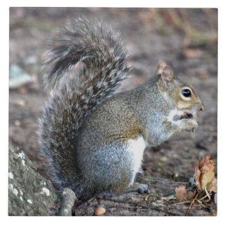 Squirrel Munching on an Acorn Large Square Tile