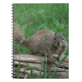 Squirrel Notebooks