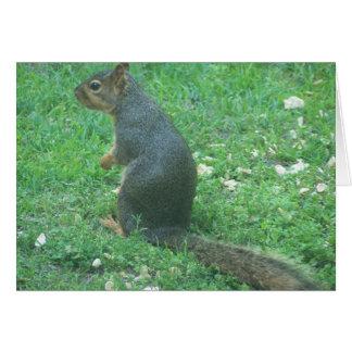 squirrel nutty blank note card