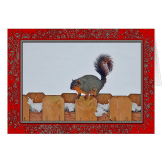 Squirrel on a Fence 6269 Christmas Card