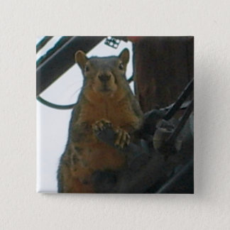 Squirrel on a Pole in Colorado 15 Cm Square Badge