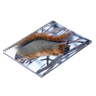 Squirrel on Branches Covered in Winter Snow Ice Notebooks