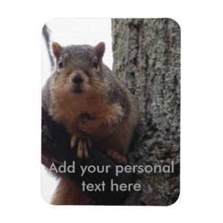 Squirrel photo magnet laminated