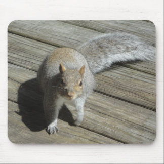 Squirrel Photograph Mousepads