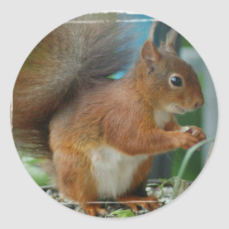 SQUIRREL Photography Jean Louis Glineur Classic Round Sticker