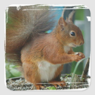 SQUIRREL Photography Jean Louis Glineur Square Sticker