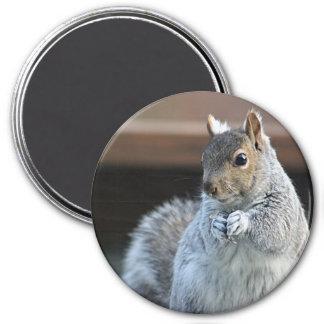 Squirrel photography 7.5 cm round magnet