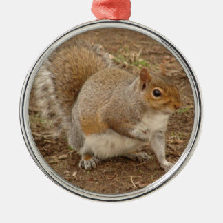 Squirrel posing for a picture round metal christmas ornament
