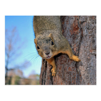 Squirrel! Postcard