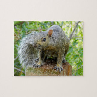 Squirrel Puzzle